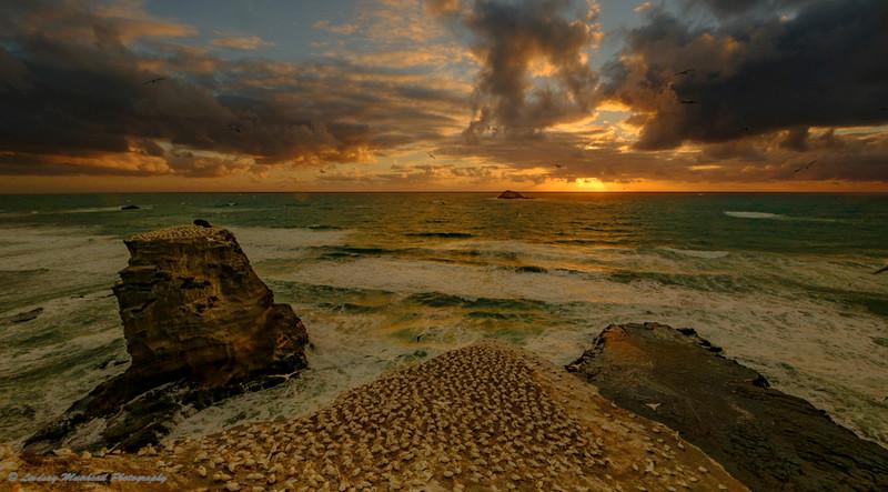 Sunset Muriwai no 1