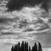Bosco di Cipressi