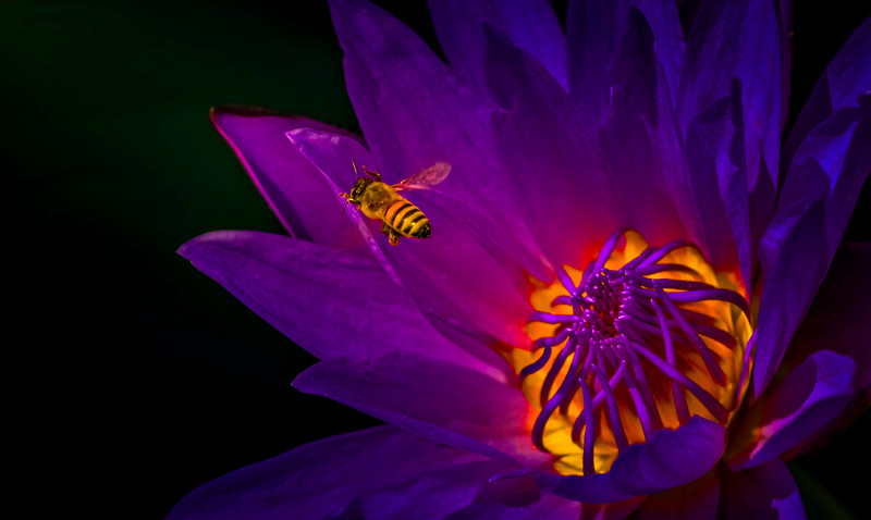 The Magic of Light-432.jpg