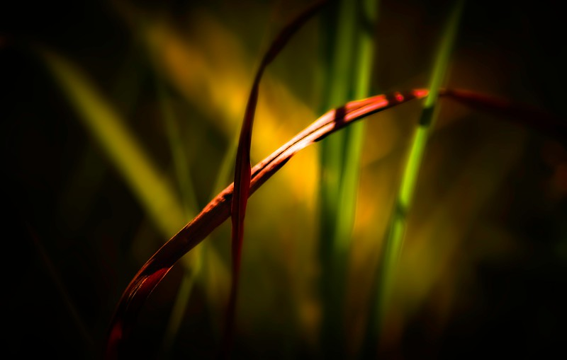 The Magic of Light-395.jpg