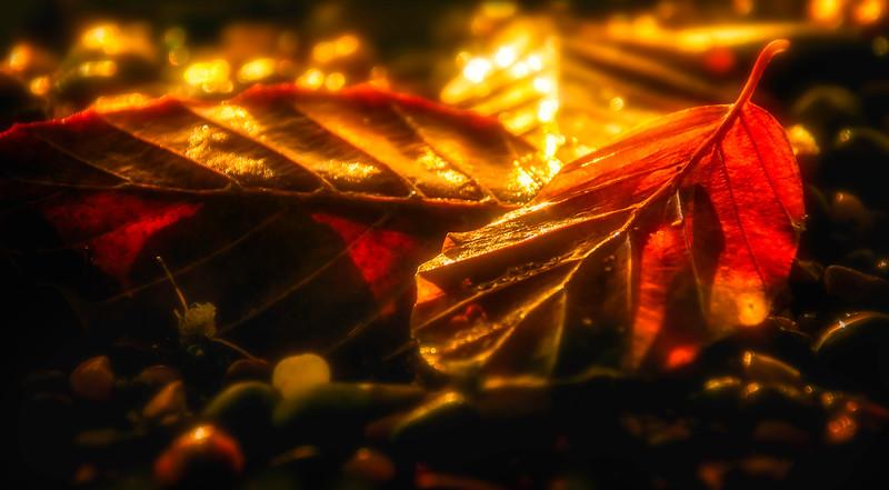 The Magic of Light-141.jpg