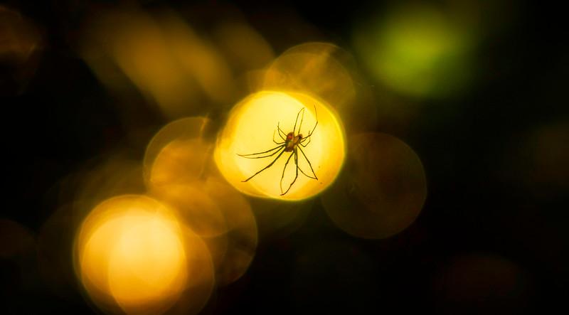 The Magic of Light-015.jpg