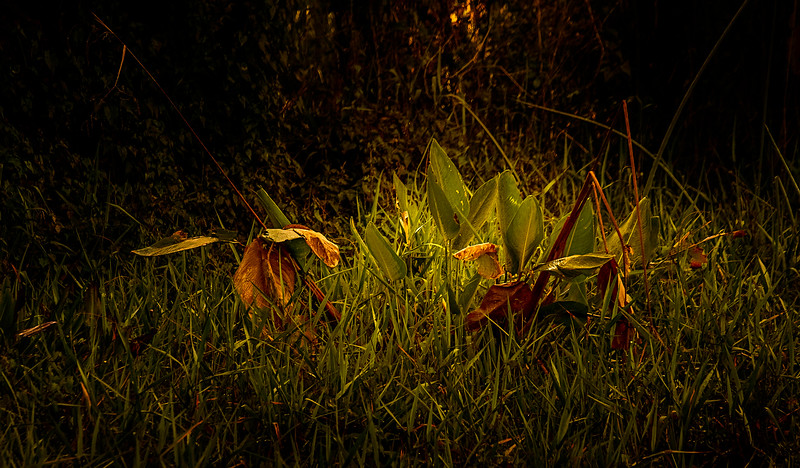 The Magic of Light-471.jpg
