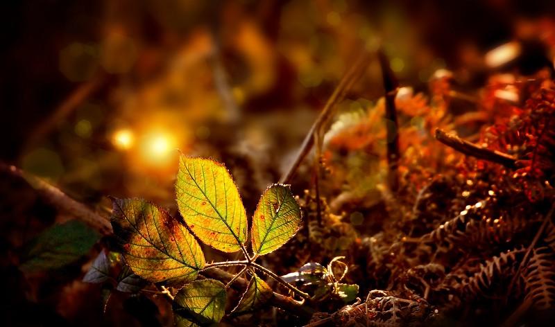 The Magic of Light-254.jpg
