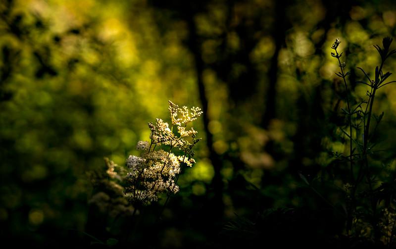 The Magic of Light-436.jpg