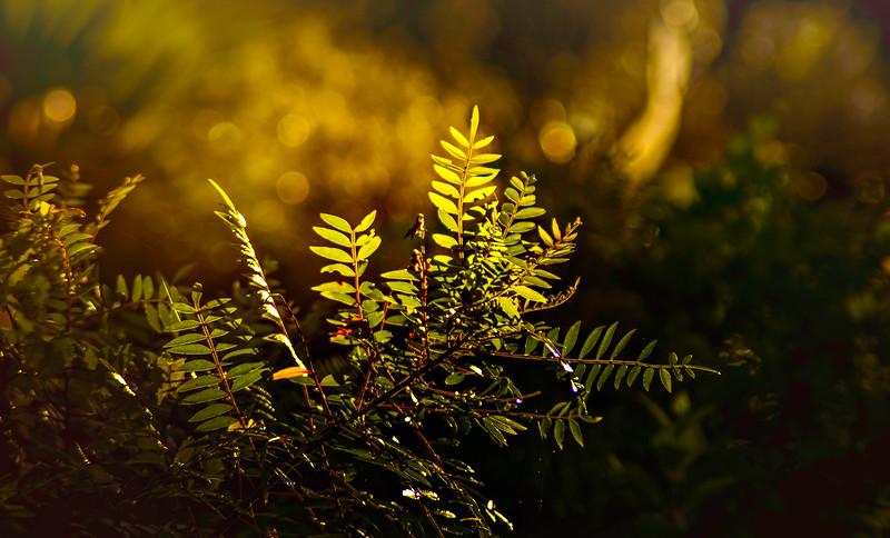 The Magic of Light-379.jpg
