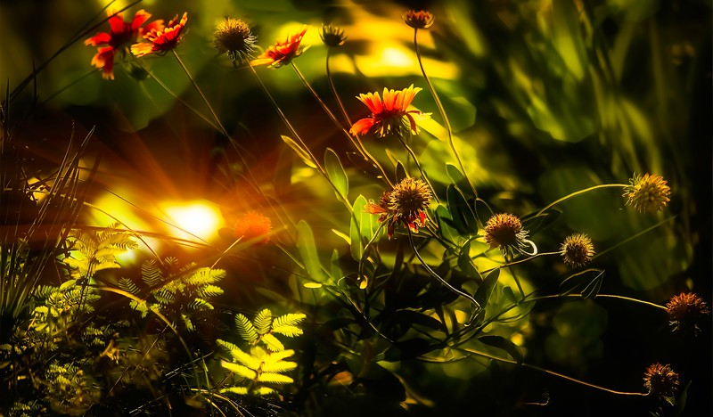 The Magic of Light-228.jpg