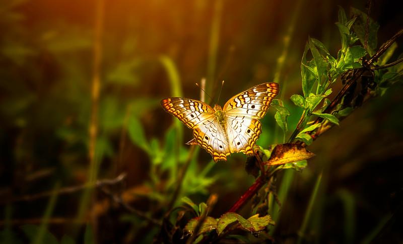 The Magic of Light-087.jpg