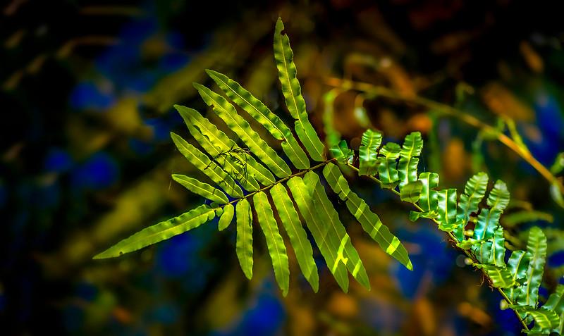 The Magic of Light-123.jpg