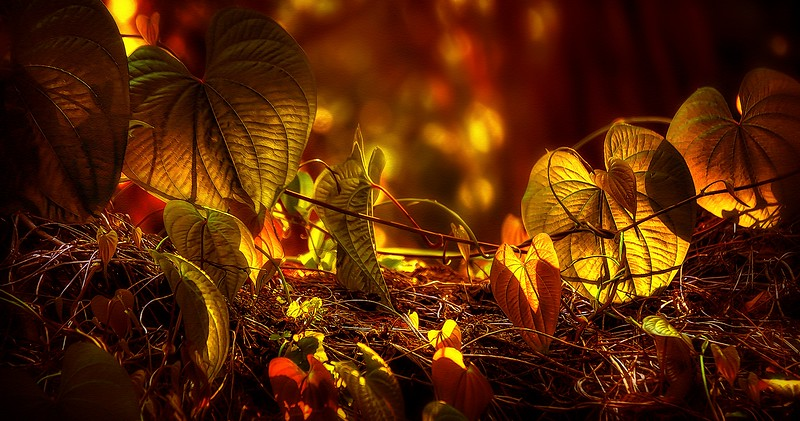 Leaves by Ray Bilcliff - www.trueportraits.com