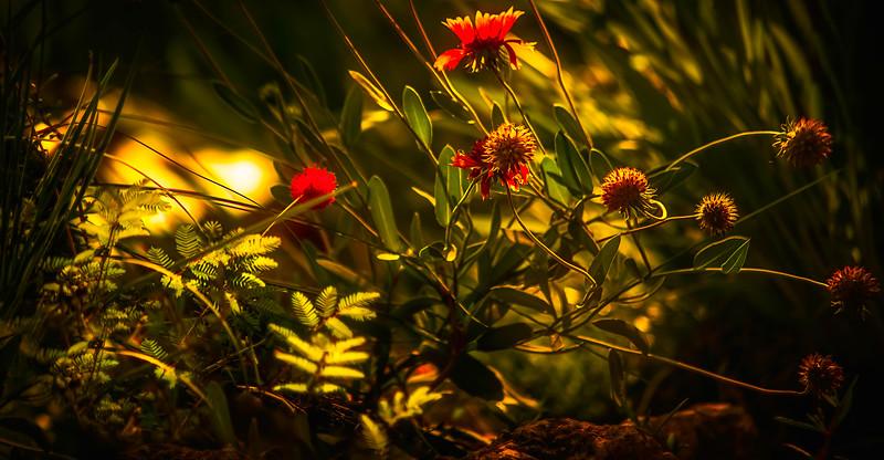 The Magic of Light-286.jpg