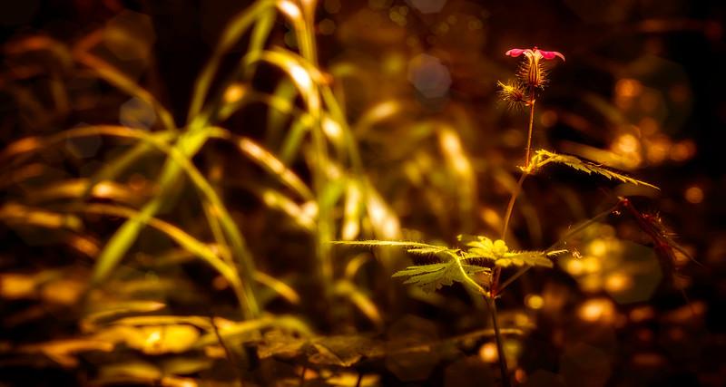 The Magic of Light-146.jpg