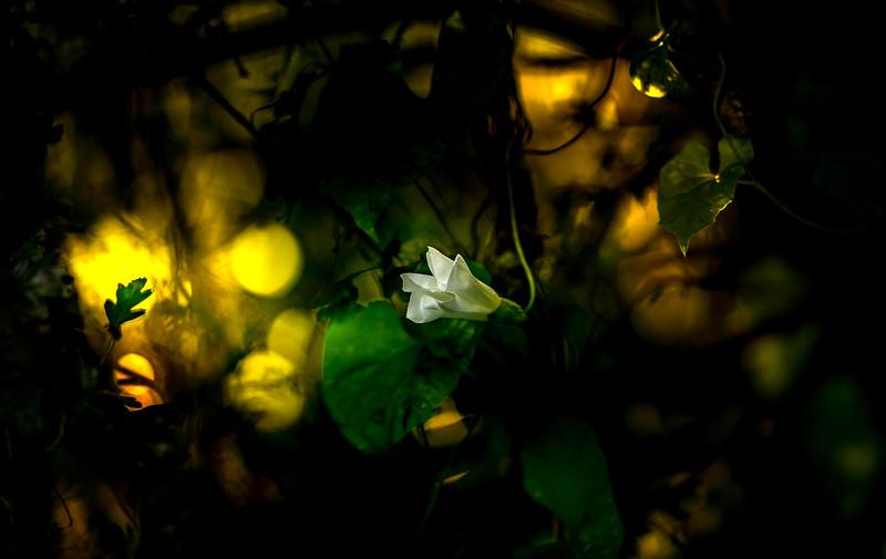 The Magic of Light-085.jpg