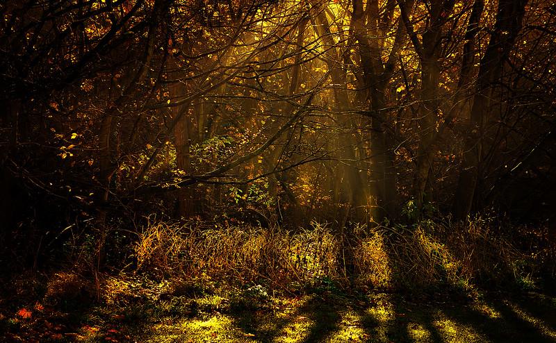 The Magic of Light-006.jpg
