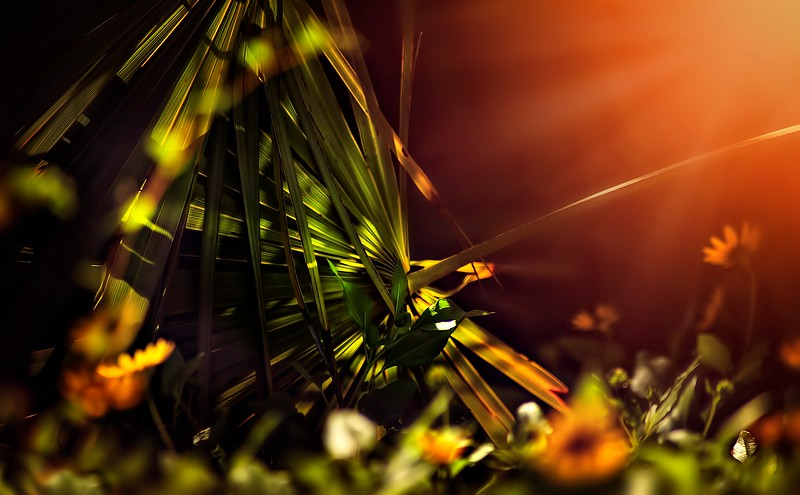 The Magic of Light-201.jpg