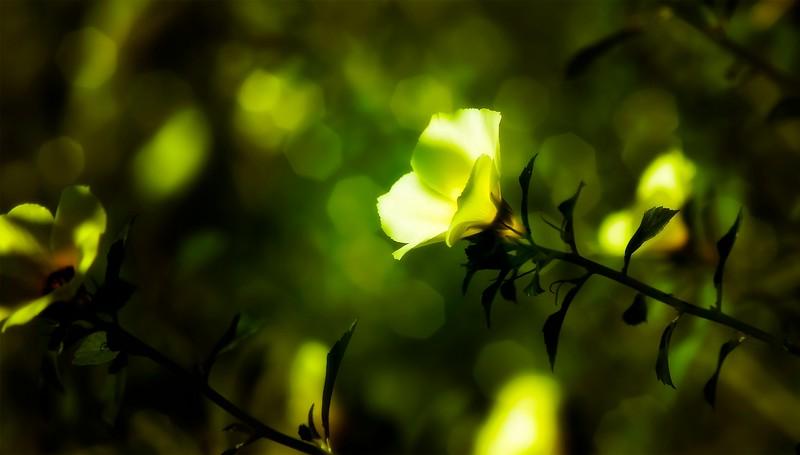 The Magic of Light-248.jpg