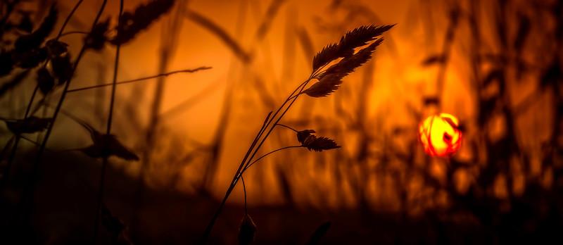 The Magic of Light-076.jpg