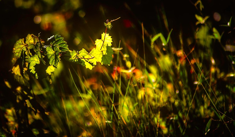 The Magic of Light-394.jpg