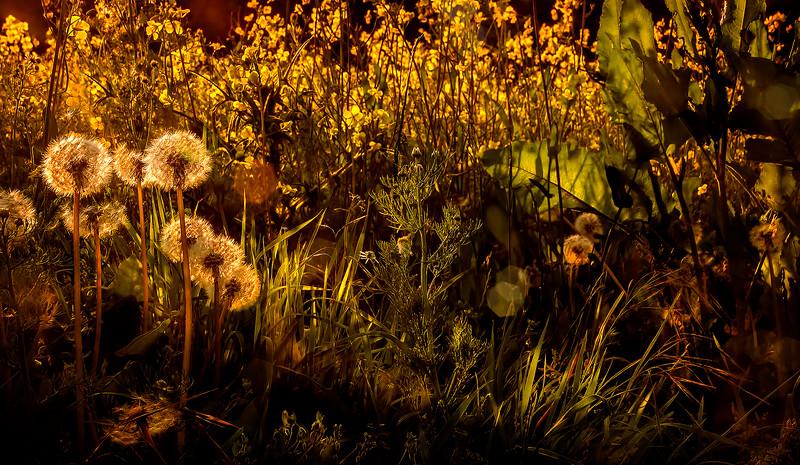 The Magic of Light-014.jpg