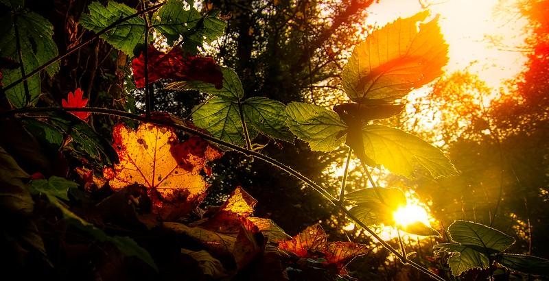 The Magic of Light-229.jpg
