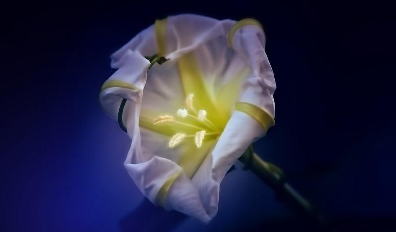 Flowers by Ray Bilcliff - www.trueportraits.com