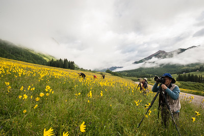 Sunflower Quest near Crested Butte - Gothic Mountain, Colorado - Linda Hanley - July 2015