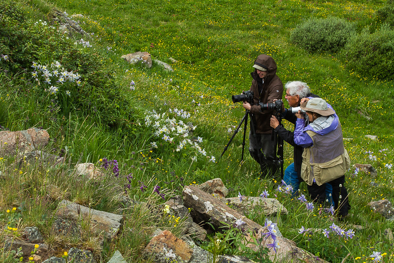 Getting a Lot of Attention from Dennis Krukover, Mike Mercado and Lin Craft, Cunningham Gulch, San Juan Mountains - Colorado Wildflowers - Nancy Varga - July 2015