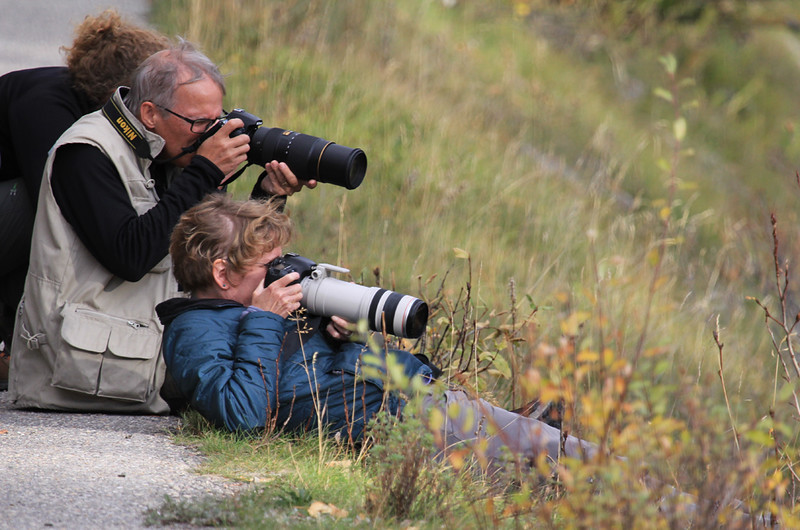 Beth Jakob and Mark Gromko photographing bears on Maligne Road - Fall Canadian Rockies Tour - Sue Cole - October 2014