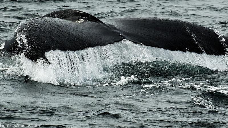 Whales Stellwegan