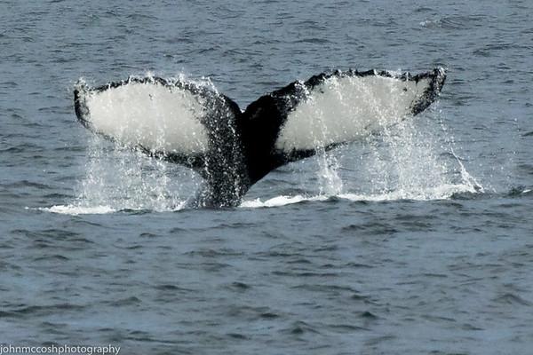 Whales-Boston-2019-011
