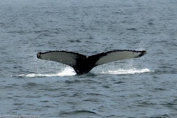 Whales-Boston-2019-016
