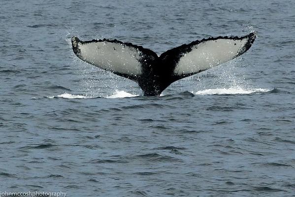 Whales-Boston-2019-014