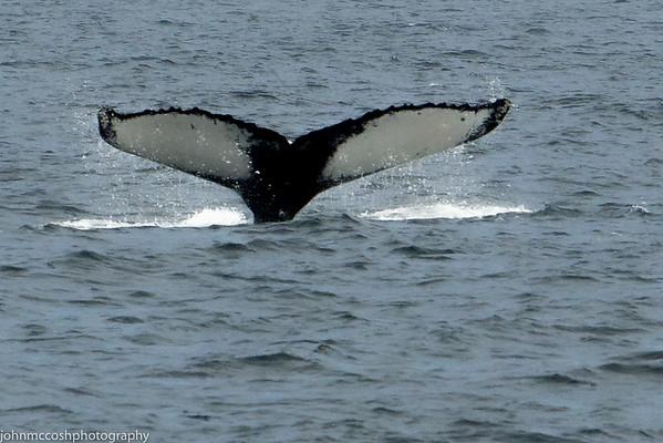 Whales-Boston-2019-015