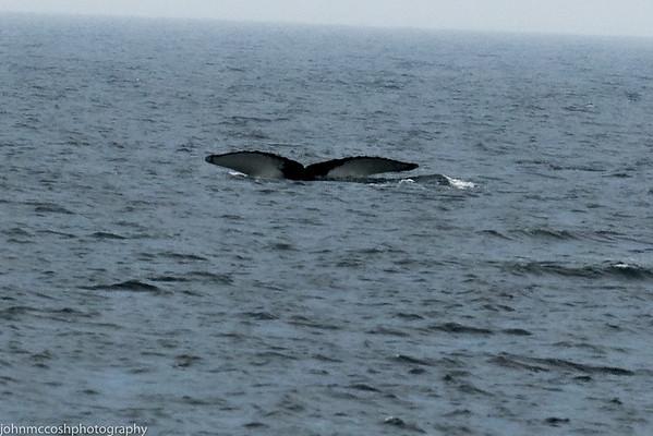 Whales-Boston-2019-006