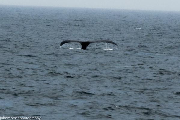 Whales-Boston-2019-003