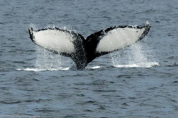 Whales-Boston-2019-012
