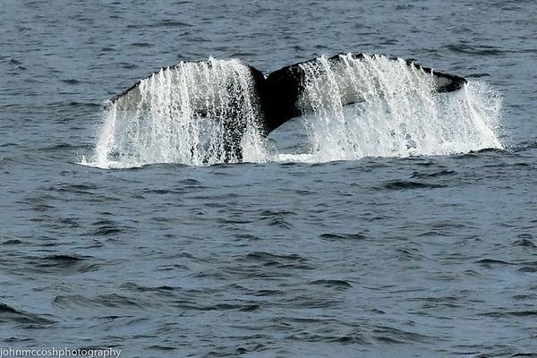 Whales-Boston-2019-010