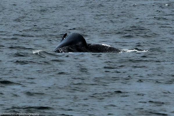 Whales-Boston-2019-008