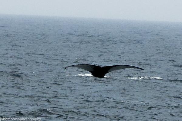 Whales-Boston-2019-005