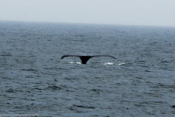 Whales-Boston-2019-004