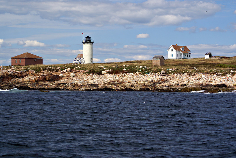 COA's Island Research Center studies the bird populations of the island including petrels, guillemots and gulls.