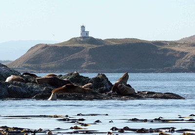 Sea Lions and Cattle Point