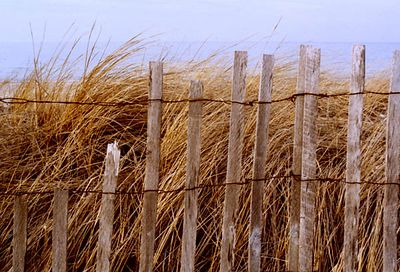 Sandy Neck Fence