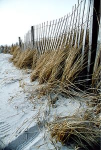 Windswept Fence
