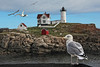 Seagulls & Lighthouse