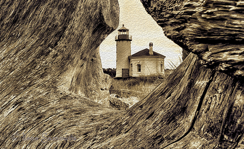 10-5-12 Another Coquille Lighthouse image - taken in Bandon, Oregon.  I was lucky enough to have a friend point out the location of this stump that nicely framed the lighthouse.  Combined two images in Photoshop with different focus points and converted using Topaz Black and White.  I then added the texture.<br /> <br /> Critiques Welcome.