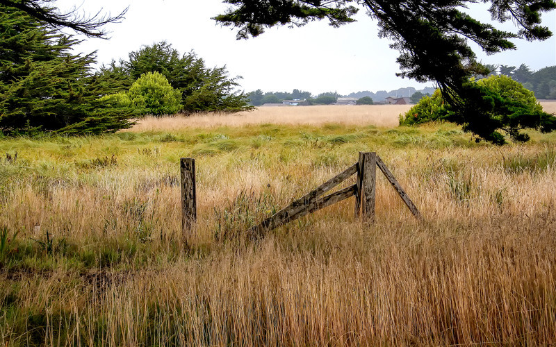 Fence in the grass