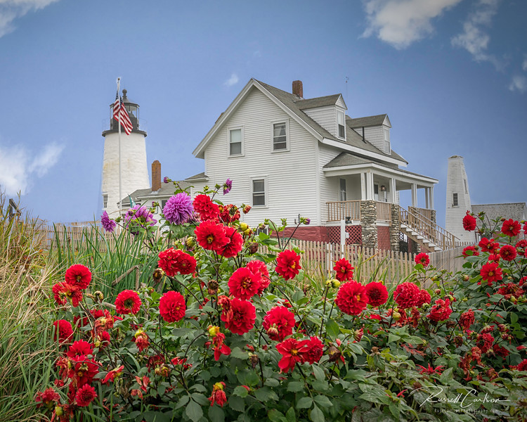 Pemaquid Point Lighthouse / Flowers