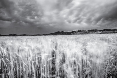 Summer Storm from wheat field