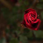 2020-04-14 Flowers in our Neighborhood Lightpainted_0024 - Lightpainted-EIP